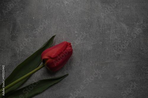 kwiat - fototapety na wymiar