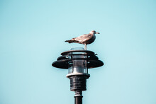 Bird On Lamp