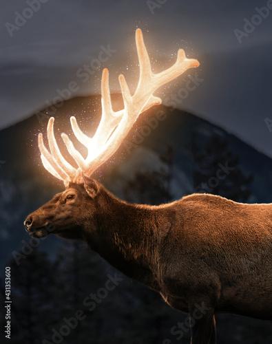 Shining deer Fototapet