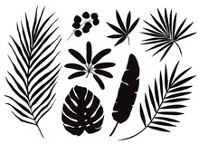 Set Of Hand Drawn Tropical Palm Leaves, Black Silhouettes Isolated On White Background. Vector