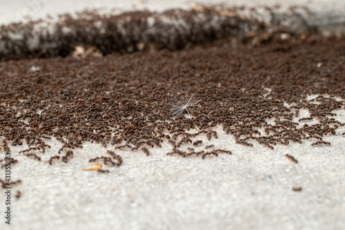 Fotografie, Obraz Ant colony in a crack