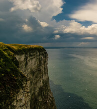 Sea Bird Colonies On The Cliffs At Bempton, North Yorkshire