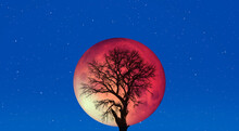 """Lone Tree With Lunar Eclipse And Blood Moon """"Elements Of This Image Furnished By NASA"""""""
