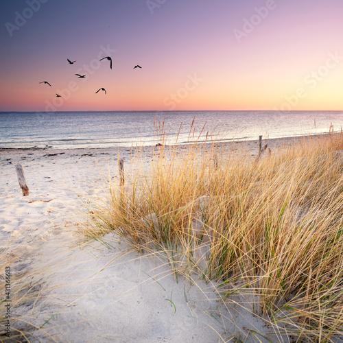 Dünen am Meer im Sommer