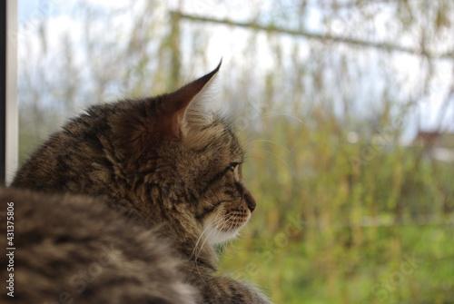 Fotografie, Obraz A mongrel cat named Chewbacca