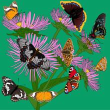 Nine Butterflies On Pink Flower