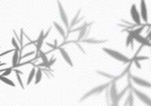 Vector Transparent Shadows Of Olive Leaves. Decorative Design Elements For Collages. Creative Overlay Effect For Mockups