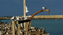The Victorian Sumpter Wharf On Oamaru Harbour, Oamaru, Otago, South Island, New Zealand.