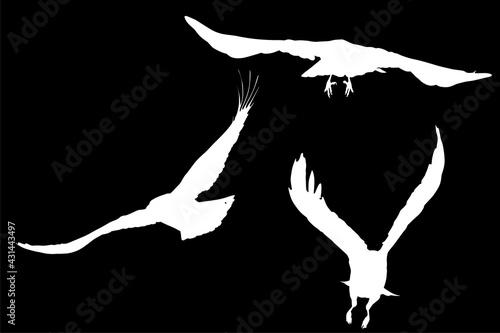 Fototapeta premium group of three crow white silhouettes on black