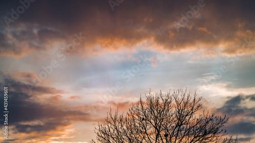 Drzewo na tle pochmurnego nieba o zachodzie słońca - fototapety na wymiar