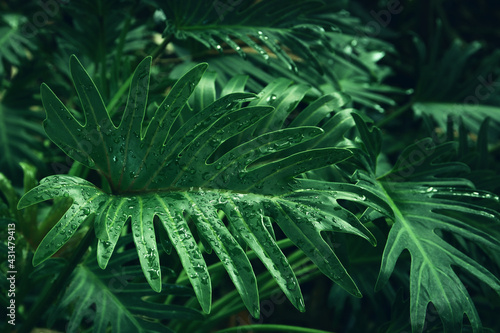 green tropical leaves background. summer and nature concept. - fototapety na wymiar