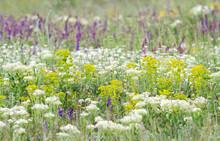 Wildflowers In Spring Blooming Steppe. Sage And Achillea Millefolium In Flowering Field.