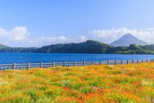 開聞岳と池田湖とポピー 鹿児島県指宿市 Mt.Kaimondake And Lake Ikedako And Poppy Kagoshima-ken Ibusuki City
