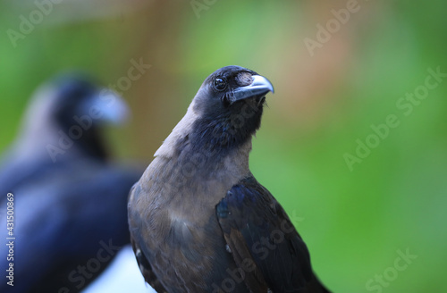 Naklejka premium black crows in a tropical resort