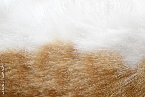 Fotografie, Obraz Cat fur texture background