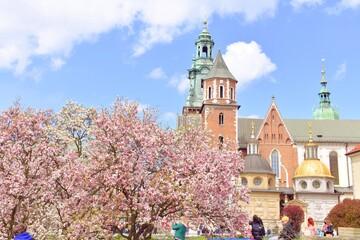 dziedziniec na Wawelu, kwitnąca magnolia, wiosenny dzień, zwiedzanie w Krakowie,