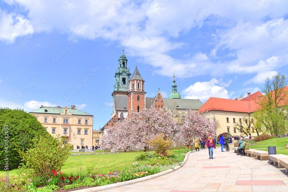 Fototapeta dziedziniec na Wawelu, kwitnąca magnolia, wiosenny dzień, zwiedzanie w Krakowie,