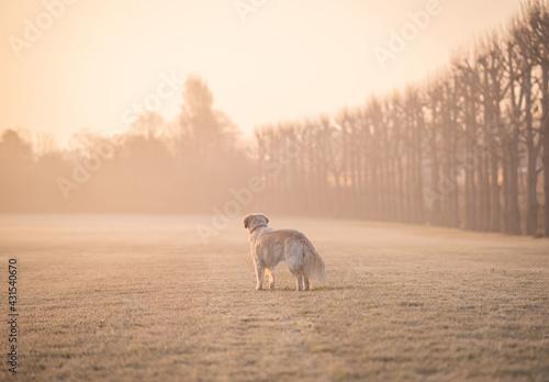 Fotografie, Obraz Dog on a frosty misty morning
