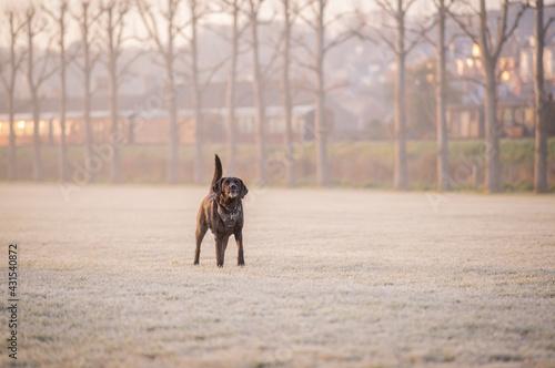 Obraz na plátně Dog on a frosty misty morning