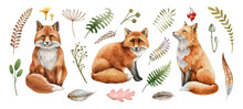 Red Fox Animal Set. Watercolor Illustration. Wild Cute Fox Sitting And Forest Herbs Collection. Wildlife Furry Animal With Red Fur And Black Paws. On White Background. Wildlife Mammal Element
