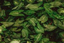 Folhagem Verde - Tropical