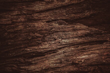 Tronco De Arvore - Textura