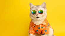 Wide Banner Of Portrait Of Meowing White British Cat Wearing Sunglasses And Orange Shirt On Yellow Background In Studio.
