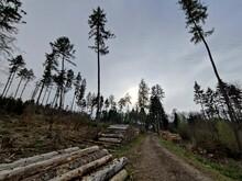 Waldsterben - Die Grauenhafte Erste Folge Von Klimawandel, Globaler Erwärmung Und Letztlich Eine Klimakatastrophe, Hier Mit Vereinzelten Fichten Wo Einst Ein Dichter Fichtenwald Im Taunus War