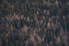 Nature Chamonix  Mont Blanc France Paysage