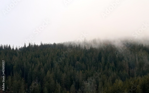 Fotografie, Obraz Berghang im Nebel