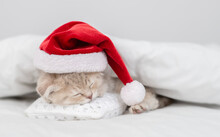 Tiny Kitten Wearing Red Santa's Hat Sleeps Under Warm White Blanlet On A Bed At Home