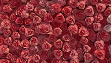 Vibrant, Romantic Wall Background With Roses. Colorful, Floral Wallpaper With Beautiful, Pink Flowers. 3D Render