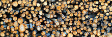Logging Industry. Cut Trees Are Stacked. Logs Before Sawing Into Boards. Tree Cut Panorama, Banner