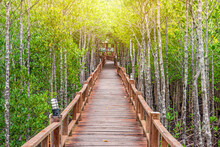 Wooden Walkway In Abundant Mangrove Forest At Mu Ko Chumphon National Park. It Is For Nature Walks To Study Coastal Plants And Animals In Thailand.