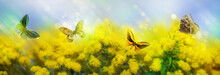 Beautiful Summer Background With Yellow Blooming Mimosa And Colorful Butterflies