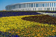 Alexander Rodchenko's Painting 'Victorious Red' Created On Flowerbed Of Viola Tricolor Pansy (Heartsease Or Johnny Jump Up) Flowers. Public Landscape Galitsky Park.  Krasnodar, Russia - April 23, 2021