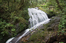 Natural Waterfall In Mountain.this Waterfall In Kew Mae Pan At Doi Inthanon