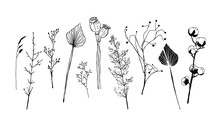 Set Of Minimalistic Dried Plants, Flowers And Leaves. Scandinavian Hygge Vector Elements Of Interior