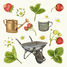 Summer Boho Old Wheelbarrow, Cup And Funnel, Strawberries Flowers, Leaves
