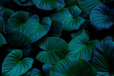 blue and green leaves background
