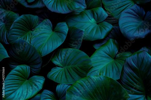 blue and green leaves background - fototapety na wymiar