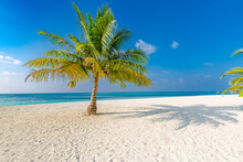 Wonderful Dream Beach With Lonely Palm Tree On White Sand And Turquoise Ocean. Tropical Island Coast, Shore With Sunny Blue Sky, Relax Travel Tourism Landscape. Nature Beach View, Beautiful Outdoors