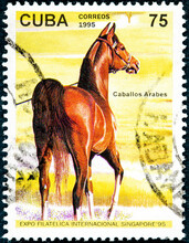 A Stamp Printed In Cuba Showing Arab Horse