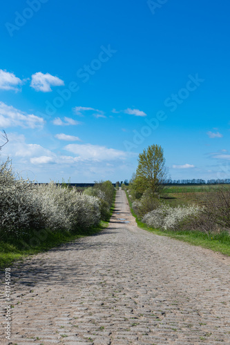 rural road in spring on a sunny day