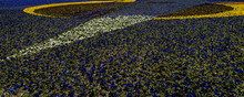 """Fragment Of Painting """"Victorious Red"""" Made Of Flowers. Flowerbed Of Viola Tricolor Pansy Flowers (Heartsease Or Johnny Jump Up). Alexandra Rodchenko. Landscape Park. Krasnodar, Russia - April 23, 2021"""