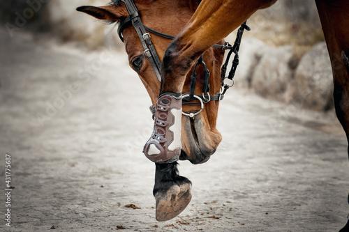 Платно Equestrian sport