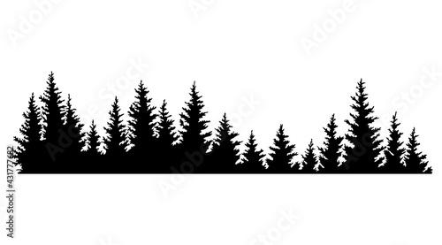 Valokuva Fir trees silhouettes