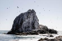 Seagulls In Sea