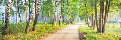 Fotografia An alley on a single lane rural road through the green birch and other deciduous trees