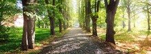A Gravel Road Through Tall Green Trees In A City Park On A Clear Summer Day. Sunlight Through The Tree Trunks, Shadows On The Ground. Environmental Conservation, Recreation Theme. Riga, Latvia